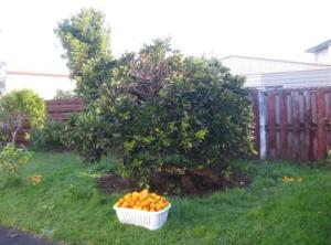 fruit_tree